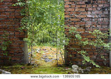 trees grow in an abandoned building on a background of a brick wall