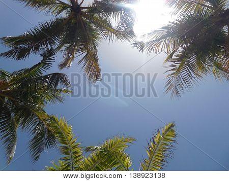 Sunny palm at the Coral Tower pool at Atlantis, Bahamas