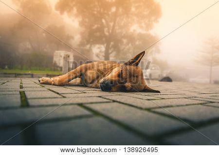 Dog taking a nap at Big Buddha, Hong Kong