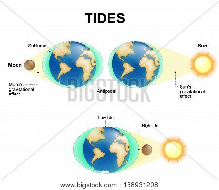 Tides depend where the sun and moon are relative to the Earth. Gravity and inertia creating tidal bulges on opposite sides of the planet. The gravitational force of the moon pulls the ocean's waters toward it creating bulge. poster