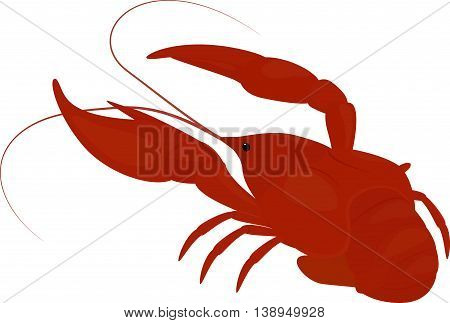boiled red crayfish, crawfish isolated on white