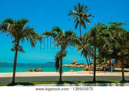 Palm Trees. Nha Trang. Vietnam