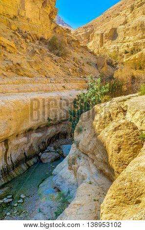 The noisy mountain river in the narrow shady canyon of Ein Gedi Nature Reserve Judean desert Israel.