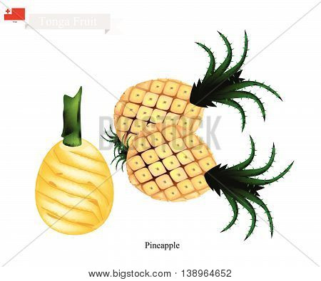 Tonga Fruit Illustration of Pineapple. One of The Most Popular Fruits in Tonga.