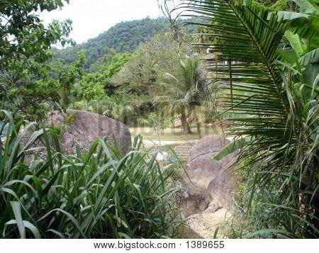 Island Jungle 2