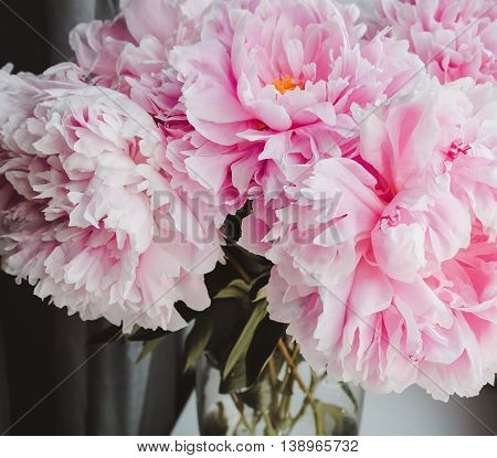 Beauty bunch of pink peonies peony flowers in vase background. Spring or summer lovely bouquet. Bloom love concept. Card, text place, copy space. Wallpaper, film effect tonal instagram