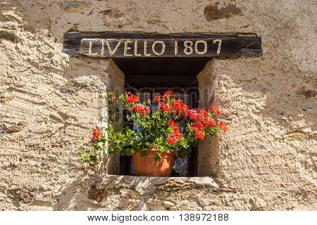 flower on the windowsill in a chalet - Altitude 1807mt - Ponte di Legno Italy