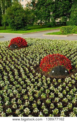 Summer park landscaping view - flowerbeds with landscaping details in form of ladybugs covered with red begonia flowers. Unusual funny landscaping in the summer park.