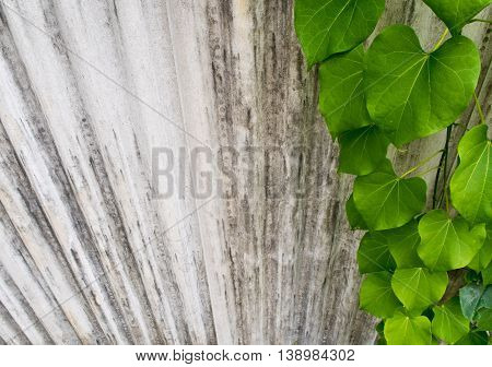 Ivy leaf shaped like heart on fence made of corrugated roof tiles