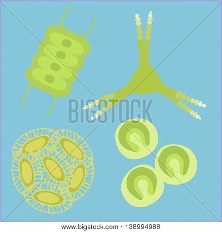 Phytoplankton small organisms. Vector illustration for simple planktonic animal plants .