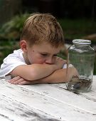 a little boy looking at two toads in a jar. poster
