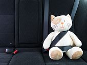 Plush toy cat strapped in with seat belt in back seat of car. Safety on the road. Protection concept. poster