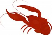 boiled red crayfish, crawfish isolated on white poster