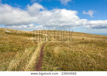 Pathway On Meadow