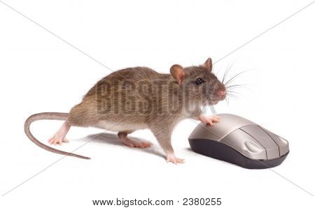 Rat And The Mouse