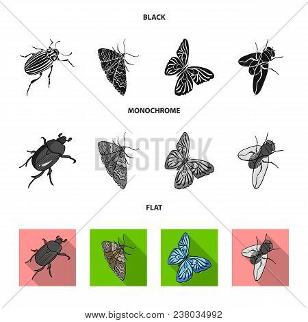 Arthropods Insect Beetle, Moth, Butterfly, Fly. Insects Set Collection Icons In Black, Flat, Monochr