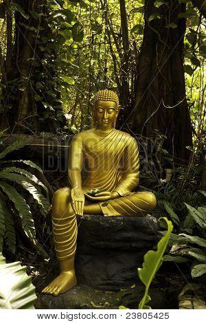 The mercy of Buddha
