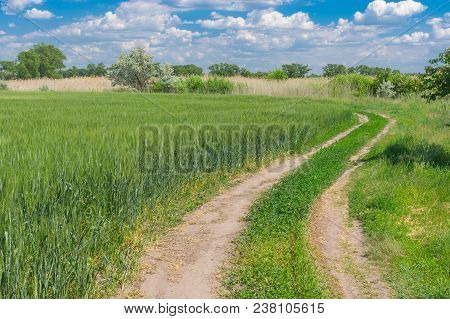 Sunny Spring Landscape With An Earth Road At The Edge Of Agricultural Fields With Green Wheat Near D