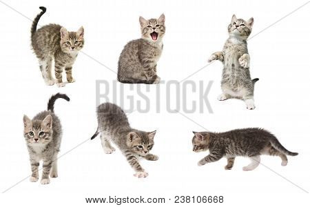 Set Of Photos Of A Cute Little Grey Color Playful Kitten Isolated On White