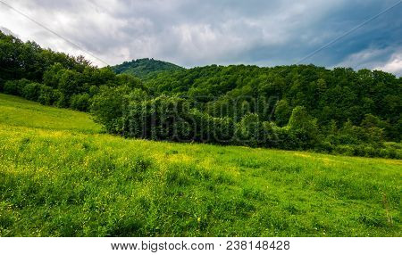 Grassy Pasture Near The Forest In Stormy Weather. Natural Agriculture Concept. Beautiful Mountainous