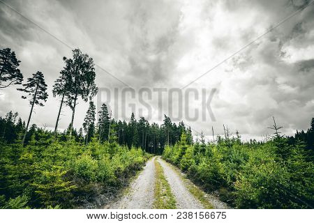 Dirt Road Going Into A Forest In Cloudy Weather With Pine Trees Along The Road