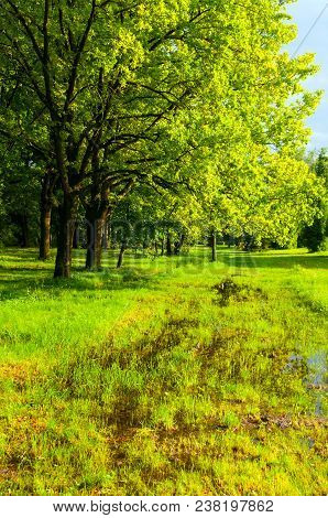 Spring Landscape. Park Spring Trees And Flooded Spring Lawn In The Park In Sunny Weather. Colorful S