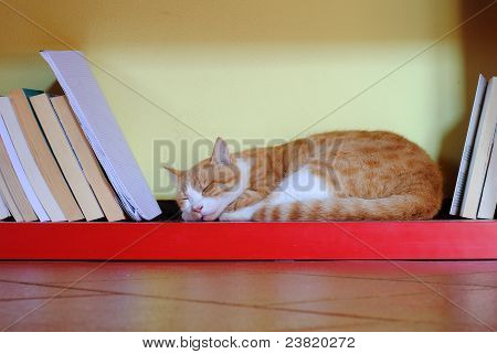 orange cat sleeping over a red bookcase