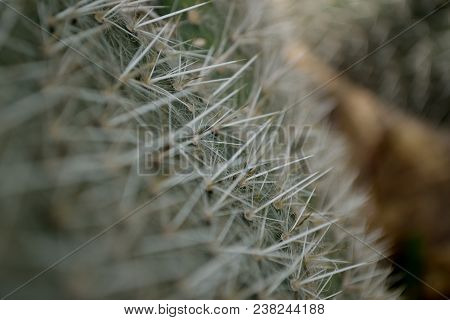 A Close Up Image Of A Prickly Pear Cactus