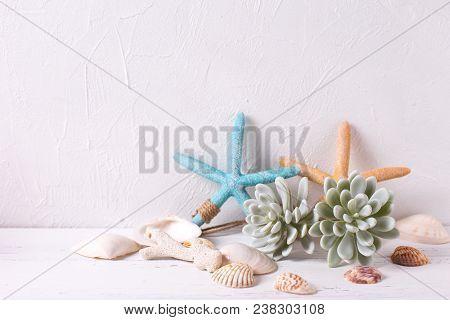 Marine  Decorations On White Textured  Background. Sea Star, Shells, Coral, Succulent Echeveria. Sea