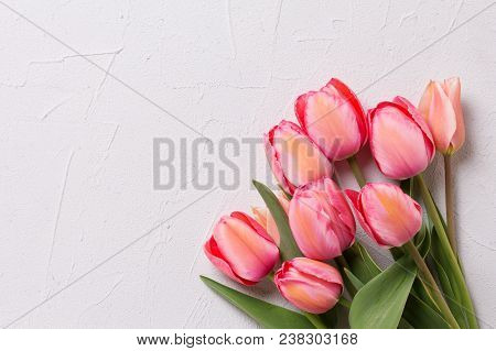 Border From Pink Tulip Flowers On  Textured Background. Floral Still Life.  Selective Focus. View Fr