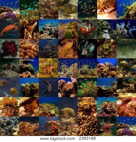 Collage allgemeine Unterwasser (groß)