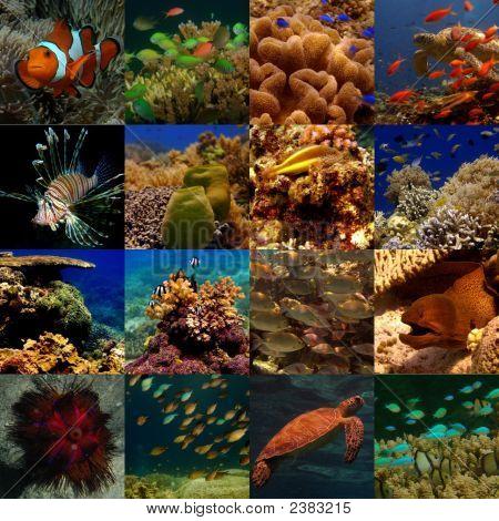 Collage - allgemeine Unterwasser (Extra Small)