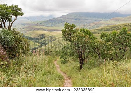 The Trail From Lookout Rock To Mahai In The Kwazulu-natal Drakensberg Passes Through A Tree-protea F
