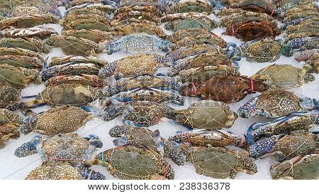 Flower Crab, Blue Crab, Blue Swimmer Crab, Blue Manna Crab, Sand Crab On Ice In The Supermarket