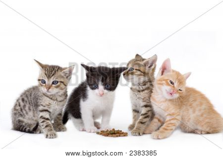Four Kittens Sits Behind A Dry Food