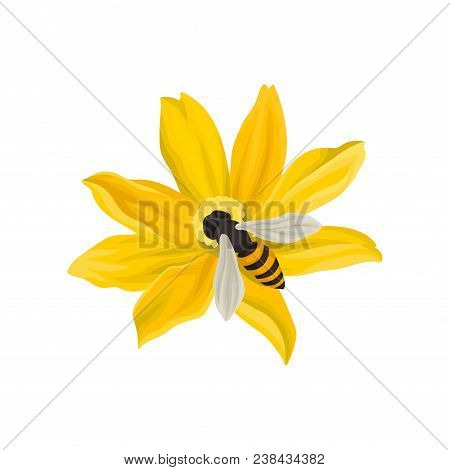 Bee Pollinating Beautiful Flower. Cartoon Illustration Of Flying Insect With Black-and-yellow Body.