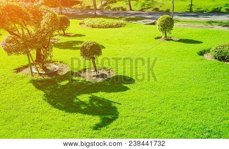 Sunlight Shines On The Green Lawn In The Quiet Garden., Landscaped Formal Garden, Front Yard With Ga