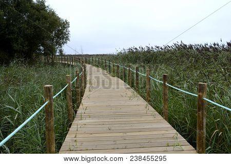 Footbridge In Pantanal Ecosystem Protected Natural Reserve
