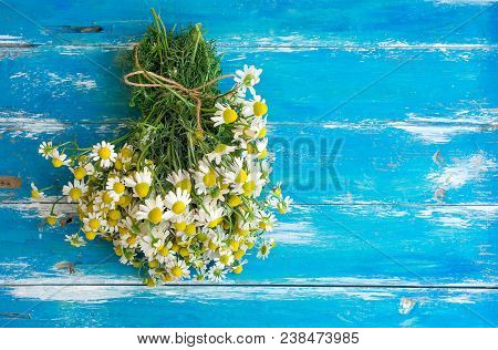 Bouquet Of Freshly Picked Camomile Flowers Tied With Twine On Aged Plank Wood Blue Background. Beaut
