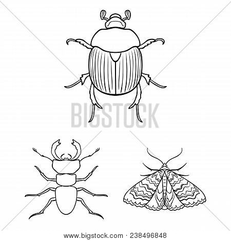 Different Kinds Of Insects Outline Icons In Set Collection For Design. Insect Arthropod Vector Symbo