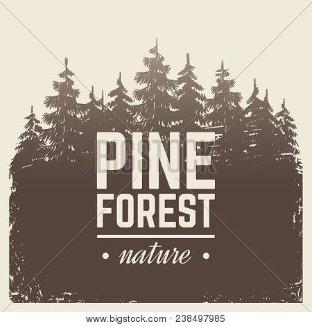 Sketch Vintage Nature Pine And Fir Tree Forest In Misty Fog Cartoon Scene Vector Retro Poster With S