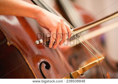 Cello Player Performing In A Symphony Orchestra