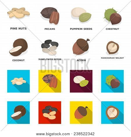 Coconut, Acorn, Sunflower Seeds, Manchueian Walnut.different Kinds Of Nuts Set Collection Icons In C