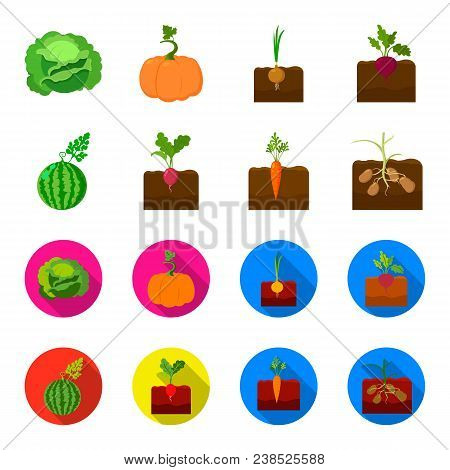 Watermelon, Radish, Carrots, Potatoes. Plant Set Collection Icons In Cartoon, Flat Style Vector Symb