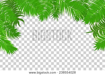 Web Summer Jungle Frame Banner Green Palm Leaves Template Isolated Transpa Background Vector A