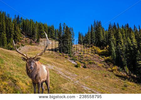 Magnificent noble deer with branched horns grazes on the slope of the mountain. The wooded mountains around lake. Beautiful autumn day. Concept of active and ecological tourism