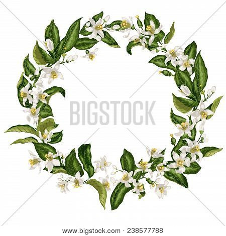 Wreath With Citrus Flowers In Shape Of A Circle With Limon, Mandarin, Lime And Orange Flowers, Leave