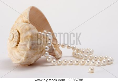 Pearls And Shell