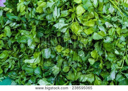 Background Of Fresh Coriander Or Cilantro Or Chinese Parsley, Coriandrum Sativum Member Of The Famil