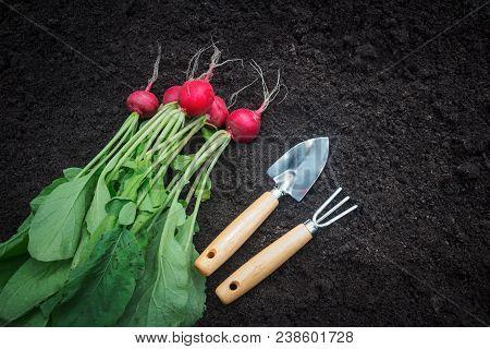 Freshly Harvested Radish And Gardening Tools On Dark Garden Soil Background